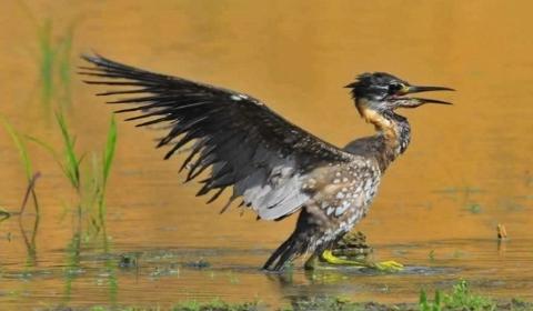 """陕西省首次发现海南虎斑�Z  有着""""全世界30种濒危鸟类之一""""头衔"""